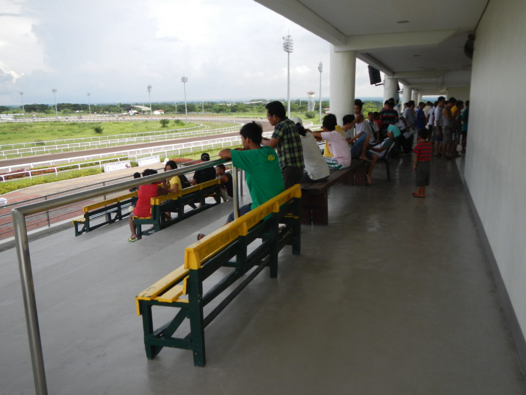 Horse Racing View